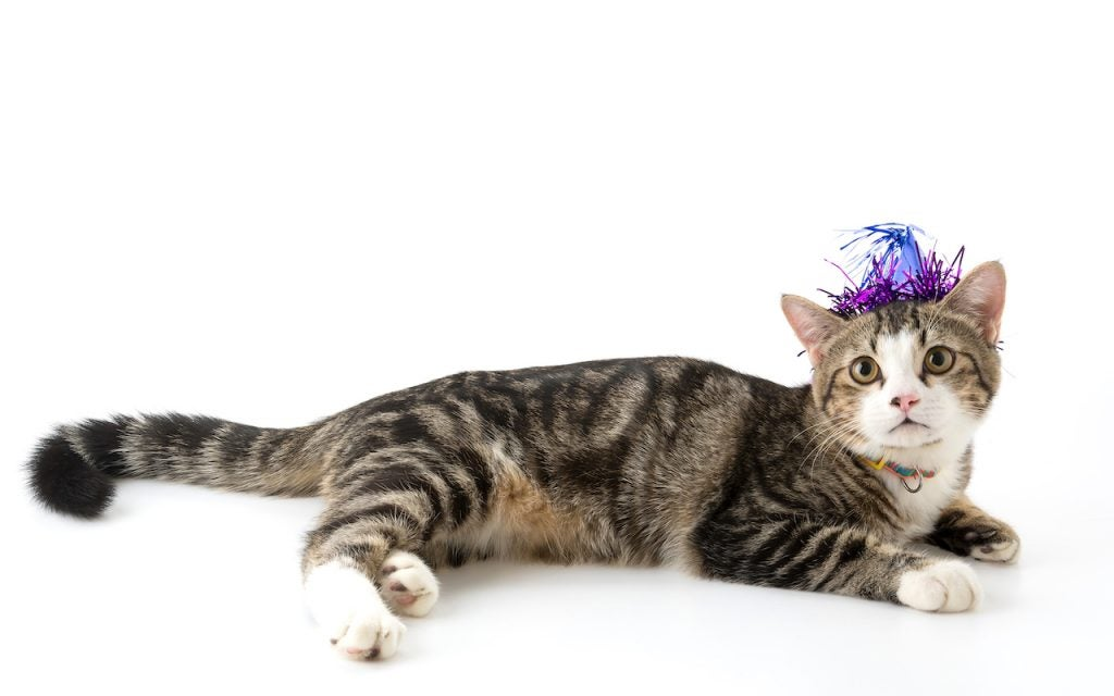 Cat wearing party hat | Claromentis